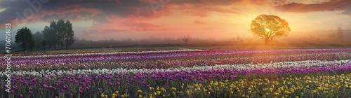 Obraz na plátne blooming tulips