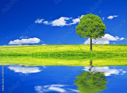 Foto op Canvas Donkerblauw El arbol que hablaba con el agua