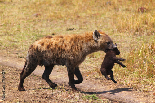 In de dag Hyena Hyena with Baby - Safari Kenya