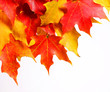 Autumn Maple Leafs over white background. Fall.