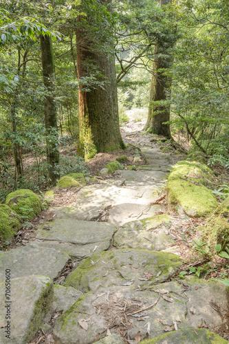 droga-w-lesie-cedrowym