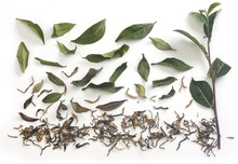 Tea Branch And Leaves With Dried Tea