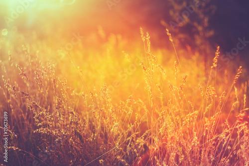 Fototapeta Yellow Dry Autumn Grass On Meadow. Toned Instant Photo obraz na płótnie