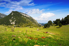 Mountain Meadow In   Pyrenees