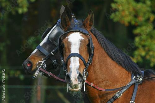 Recess Fitting Horses Twee paarden, elk kijkt naar een andere kant.