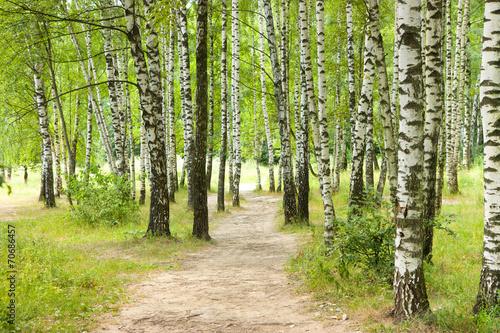 Foto op Canvas Weg in bos Birch Grove