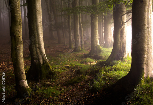 Foto auf Gartenposter Wald Magic forest