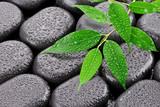 Fototapeta Kamienie - Mokre liście na kamieniach bazaltowych