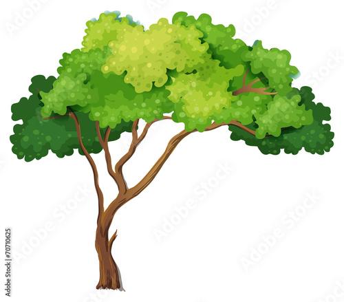 Photo Stands Kids Tree