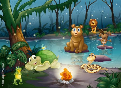 Zwierzęta i ognisko