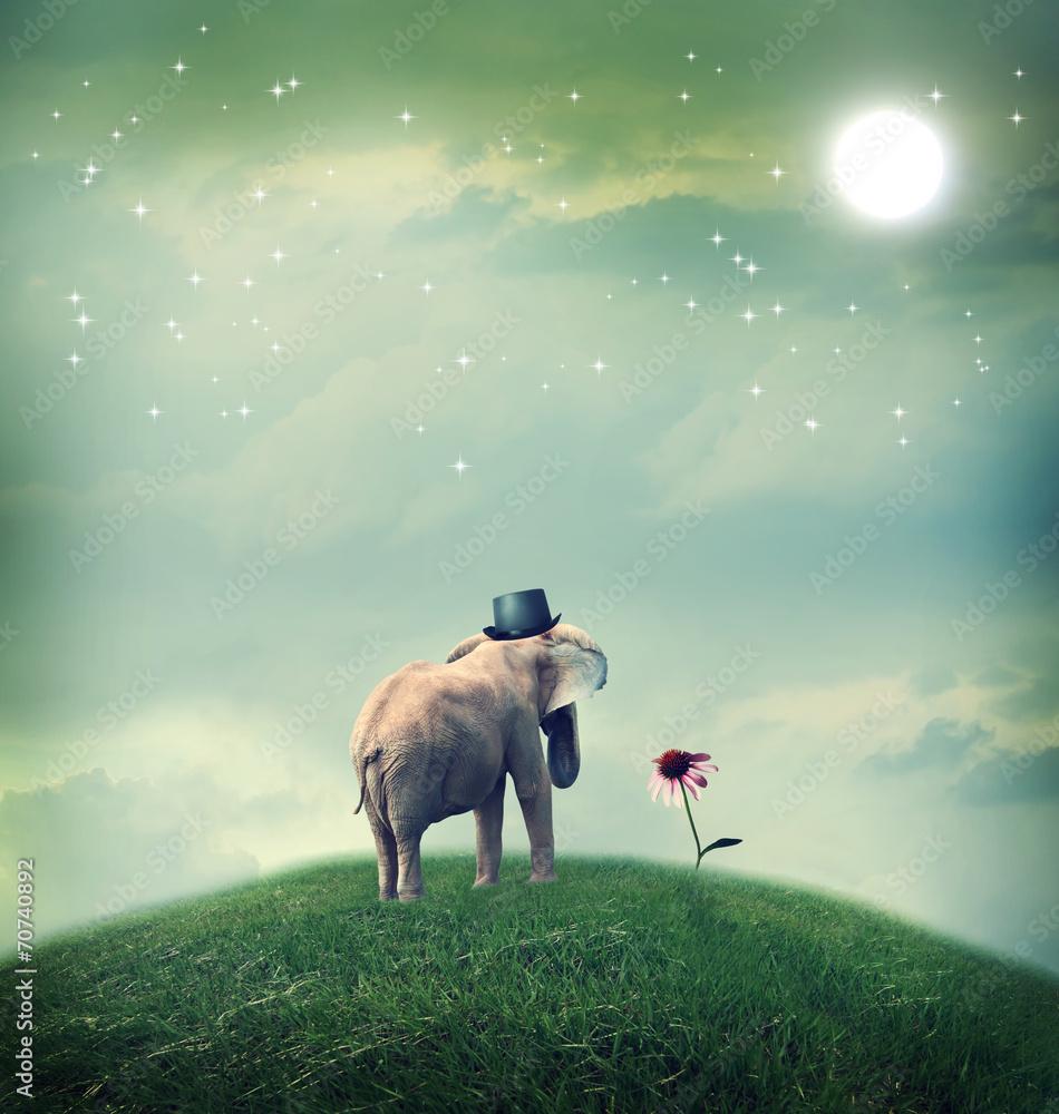 Elephant contemplating a flower - obrazy, fototapety, plakaty