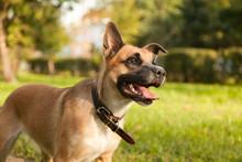 Playful Puppy Dog On Green Grass