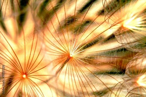 Valokuvatapetti Ombrelles