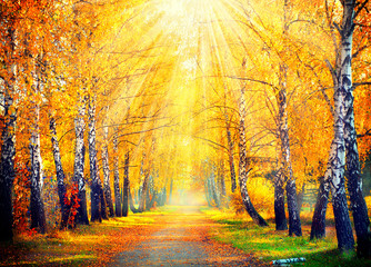 Obraz Autumnal Park. Autumn Trees and Leaves in sun rays