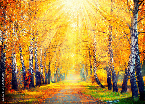 Fotobehang Weg in bos Autumnal Park. Autumn Trees and Leaves in sun rays