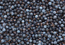 Common Juniper Berries Juniper...