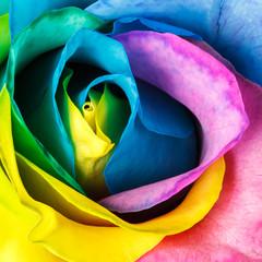 Panel Szklany Podświetlane Róże Rainbow rose