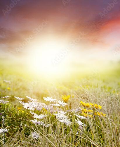 Keuken foto achterwand Zwavel geel Meadow