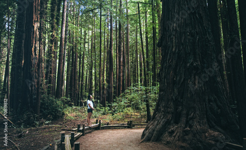 Lost in the woods (Armstrong Redwoods) Canvas Print