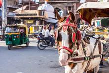 Ride Horse Cart At Sadar Marke...