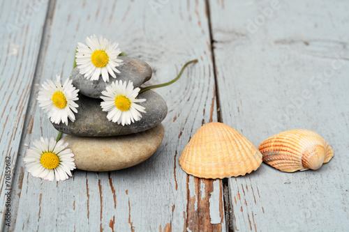 Canvas Prints Daisies Zen stenen met bloemen en schelpen op oud hout.