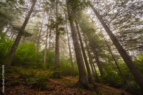 Deurstickers Herfst Mystical deep fog in a forest