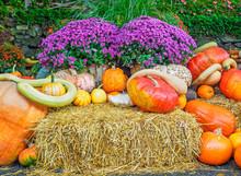 Thansgiving Produce Display