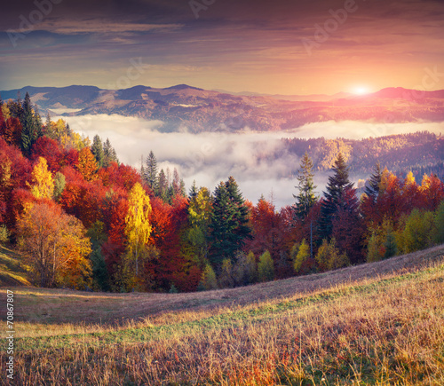 Obraz Colorful autumn sunrise in the mountains. - fototapety do salonu
