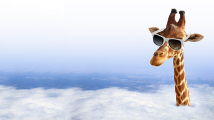 FototapetaFunny giraffe with sunglasses coming out of the clouds