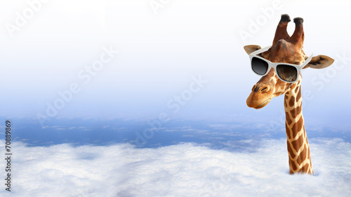 Spoed Foto op Canvas Giraffe Funny giraffe with sunglasses coming out of the clouds