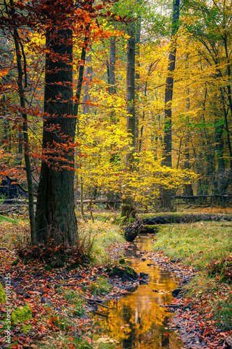Deurstickers Herfst Wild autumn forest