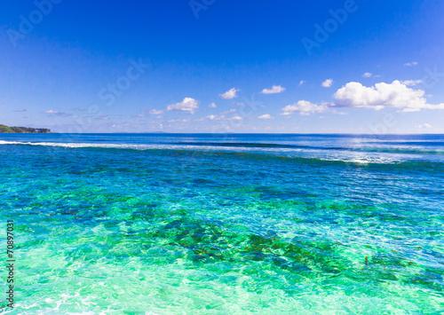 Summer Water Corals