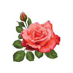 Panel Szklany Róże Elegance rose isolated in retro style