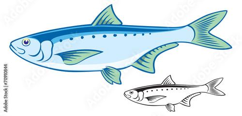 Fotografija  sardine