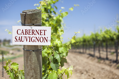Fotografie, Obraz  Cabernet Sauvignon Sign On Vineyard Post