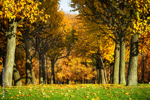 Staande foto Herfst Picturesque sunny autumn park background.