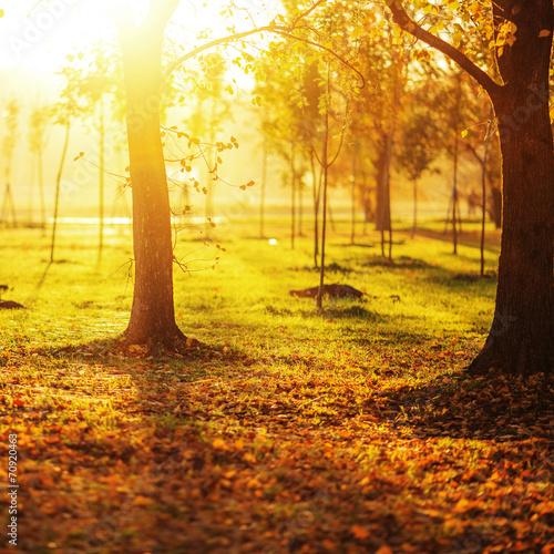 Poster Melon Picturesque sunny autumn park background.
