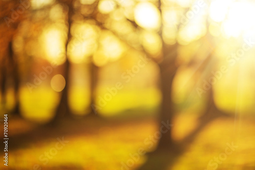 Poster Melon Bokeh blurry sunny autumn park background.