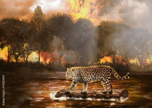 Photo  Fugindo do Fogo