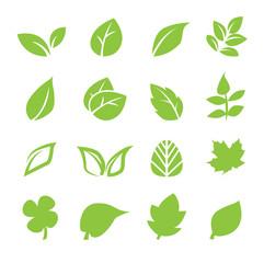 Fototapeta leaf icon