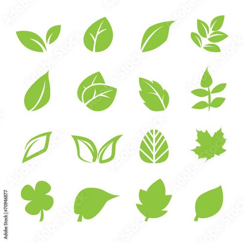 Fototapeta leaf icon obraz