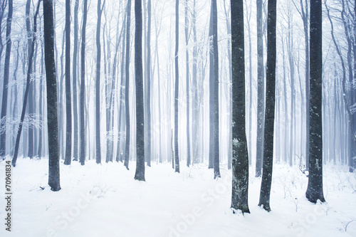 Winter snowy forest scene