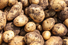 Organics Potatoes