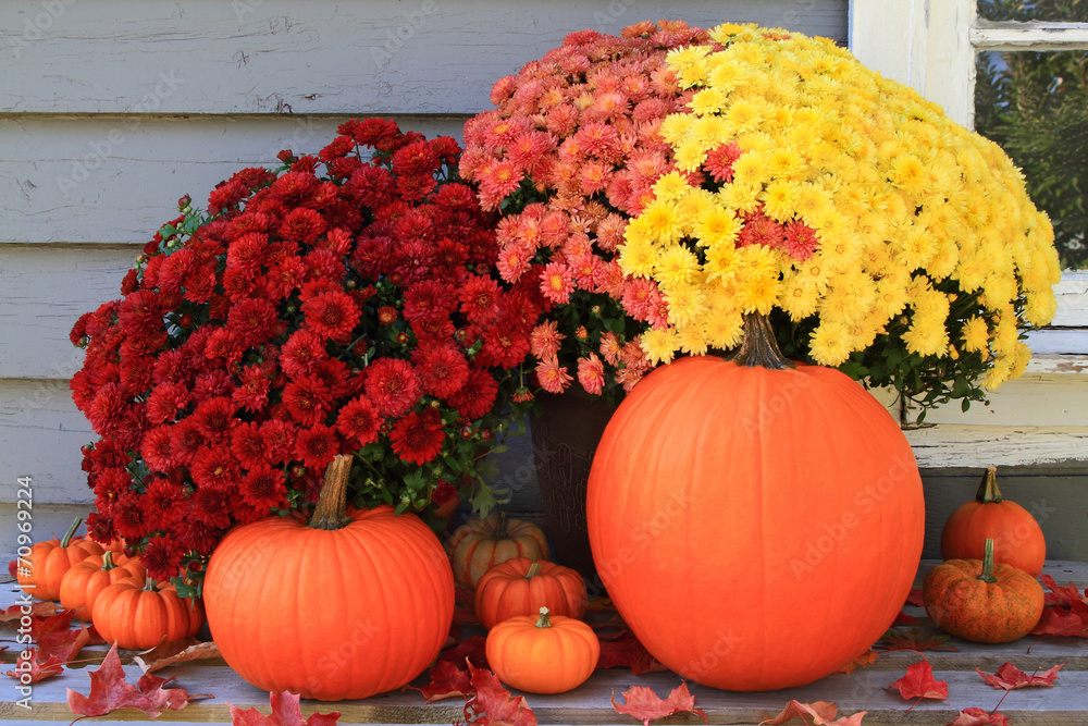 Fotografie, Obraz  Autumn and Thanksgiving decoration