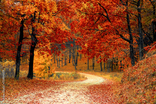 Recess Fitting Brick Road through the forest with autumn trees