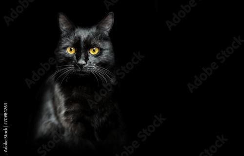 black cat on black Fototapete