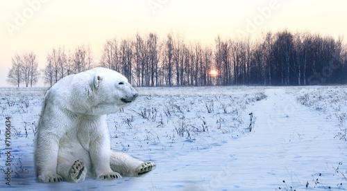 In de dag Ijsbeer Winter snow trees