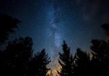 Droga mleczna - widok nocą z lasu