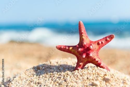 Red starfish at the beach Wallpaper Mural