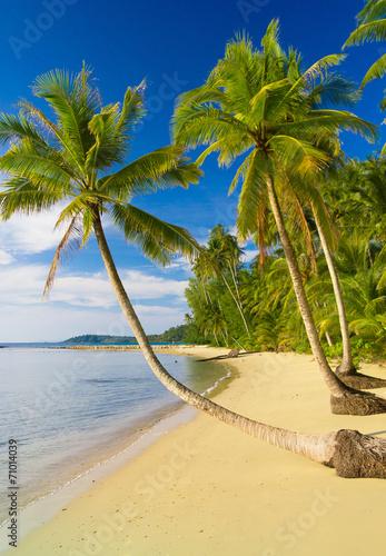 Deurstickers Strand Idyllic Island Palm Panorama